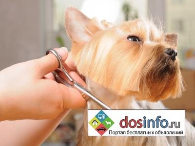 Магазин товаров для собак